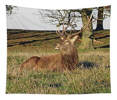 28/11/18  Tatton Park. Stag In The Park. Tapestry