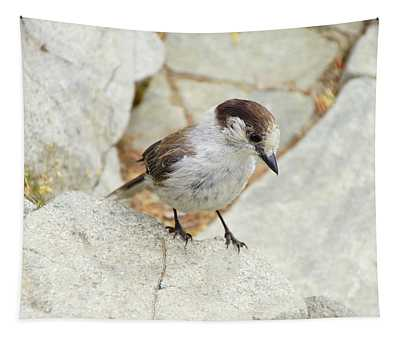 Camprobber - The Gray Jay Tapestry
