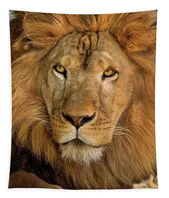 656250006 African Lion Panthera Leo Wildlife Rescue Tapestry
