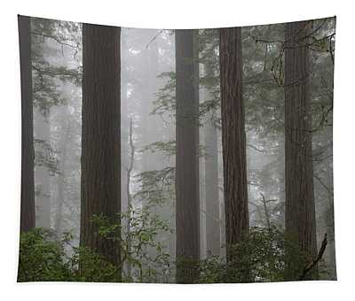 8 Fern Grove Fog N. California Tapestry