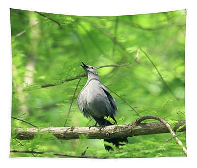 A Gray Catbird Singing Tapestry
