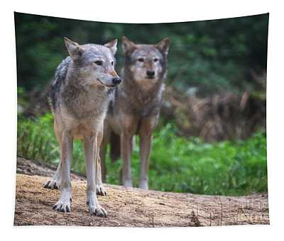 A Pair Of Mackenzie Valley Wolves Tapestry