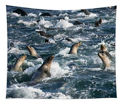 A Raft Of Sea Lions Tapestry