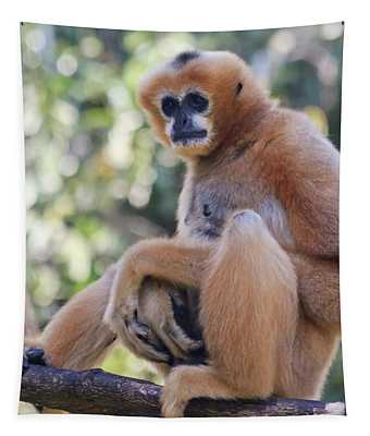 A White Cheeked Gibbon, Chiang Mai, Thailand Tapestry