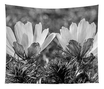 Adonis Vernalis In Monochrome Tapestry