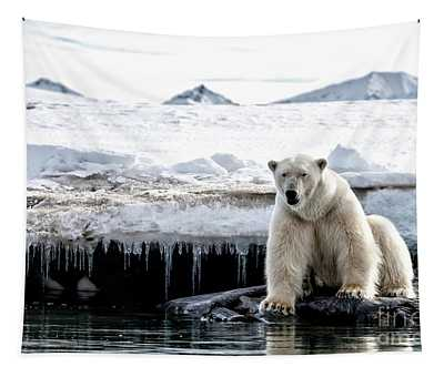 Adult Male Polar Bear At The Ice Edge In Svalbard Tapestry