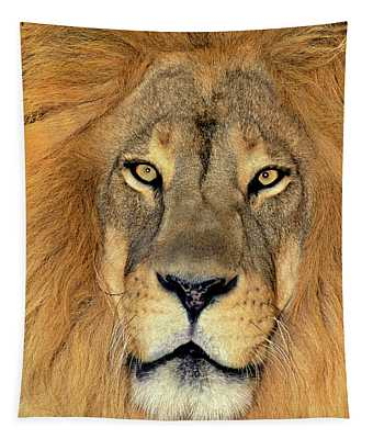 African Lion Portrait Wildlife Rescue Tapestry