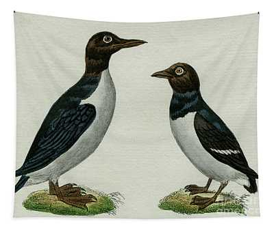 Guillemots, 1830 Tinted Engraving For Complete Works Of French Naturalist Comte De Buffon - 3 Tapestry
