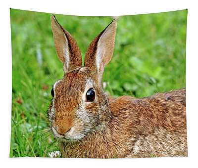 Alert Cottontail Tapestry