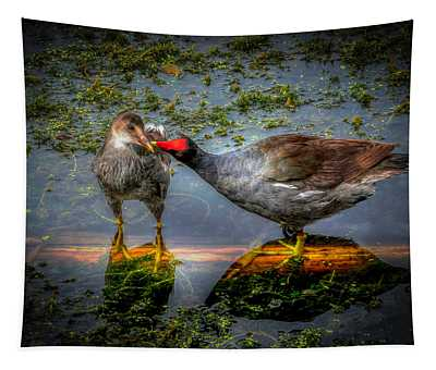 American Coot Tapestry