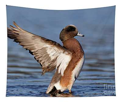 American Wigeon Delight Tapestry