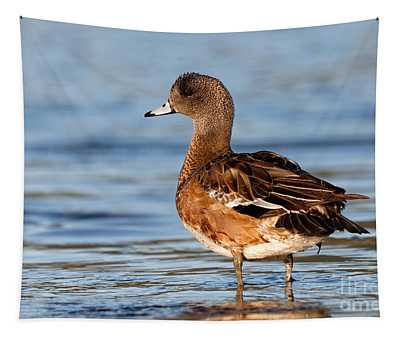 American Wigeon Standing Alert Tapestry