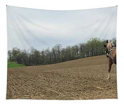 Amish Spring Tapestry
