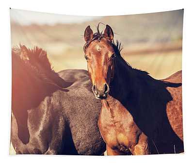 Australian Horses In The Paddock Tapestry