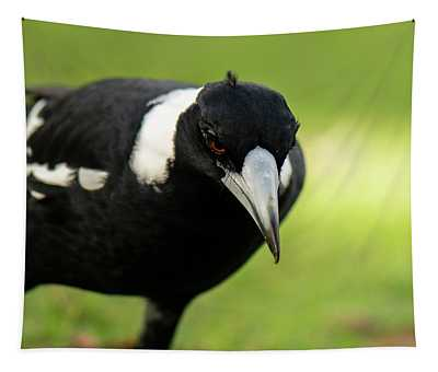 Australian Magpie Outdoors Tapestry