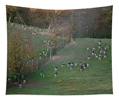 Autumn In South Moravia 9 Tapestry