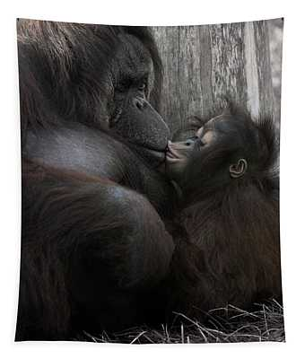 Baby Orangutan Kissing Her Mom Tapestry