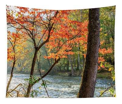 Back Light On Back Fork  Tapestry