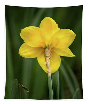 Back Of Daffodil Tapestry