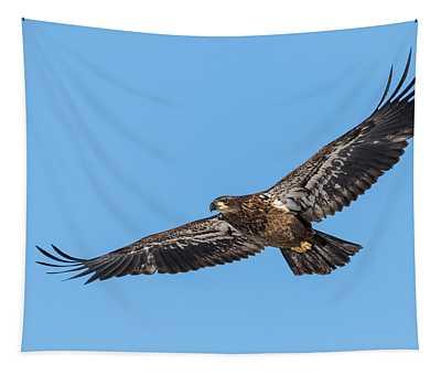 Bald Eagle 2018-6 Tapestry
