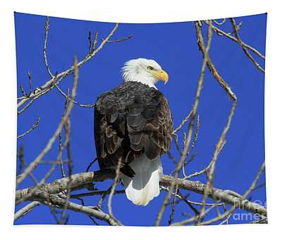 Bald Eagle And Blue Sky Tapestry