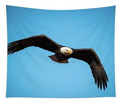 Bald Eagle In Flight  Tapestry
