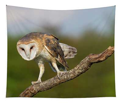 Barn Owl 5151801 Tapestry