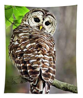 Tapestry featuring the photograph Barred Owl by Christina Rollo