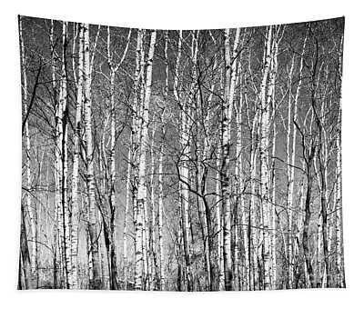 Barren Spring Birch Lebanon Hills Regional Eagan Minnesota  Tapestry