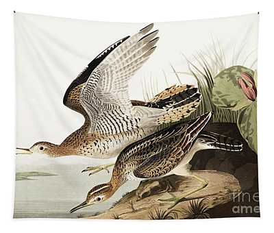 Bartram Sandpiper, Bartramia Longicauda By Audubon Tapestry