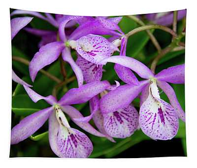 Bc Maikai 'louise' Orchid Tapestry