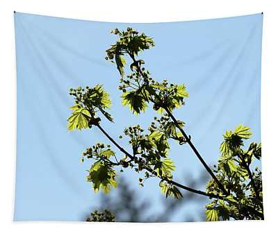 Beautiful Maple Tree Against The Blue Sky Tapestry
