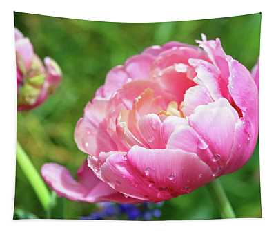 Beautiful Pink Tulip With Raindrops Tapestry