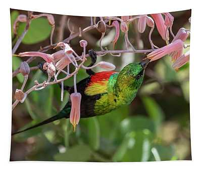 Beautiful Sunbird Tapestry