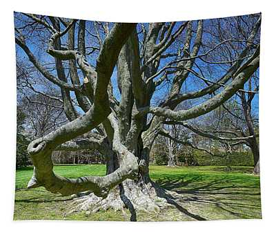Beech Tree At The Breakers Tapestry
