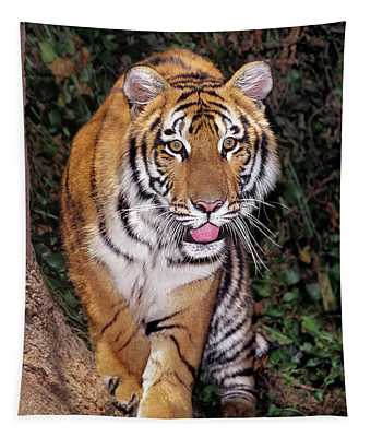 Bengal Tiger By Tree Endangered Species Wildlife Rescue Tapestry