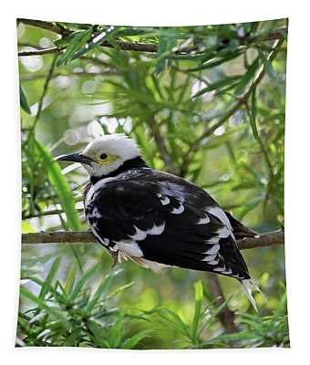 Black Collared Beauty Tapestry