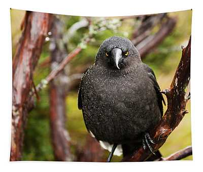 Black Currawong Tapestry