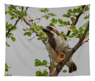 Black-throated Barbet Tapestry