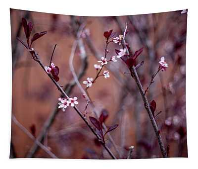 Blossoming Purple Leaf Sand Cherry Tapestry