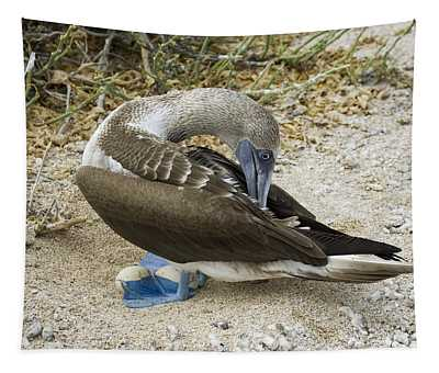 Blue Footed Booby Tapestry