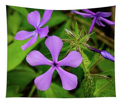 Blue Phlox Tapestry