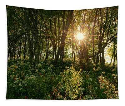Blue Ridge Parkway - Last Of Summers Light, North Carolina Tapestry