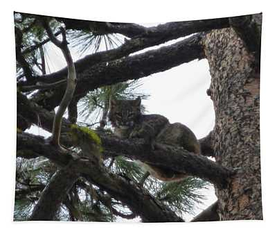 Designs Similar to Bobcat Cat Bob In A Tree
