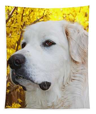 Tapestry featuring the photograph Booper by Patti Whitten