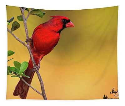 Bright Red Cardinal Tapestry