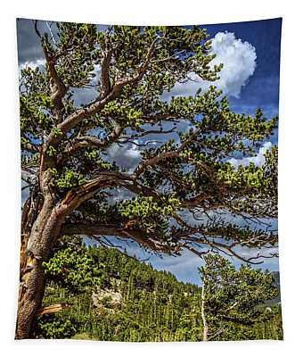 Bristlecone Trees Tapestry