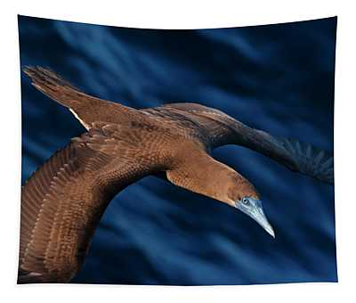Brown Booby Flying Over, Gulf Of California, Mexico Tapestry