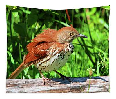 Brown Thrasher Tapestry