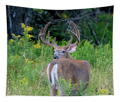 Buck At Hunter Cove Tapestry